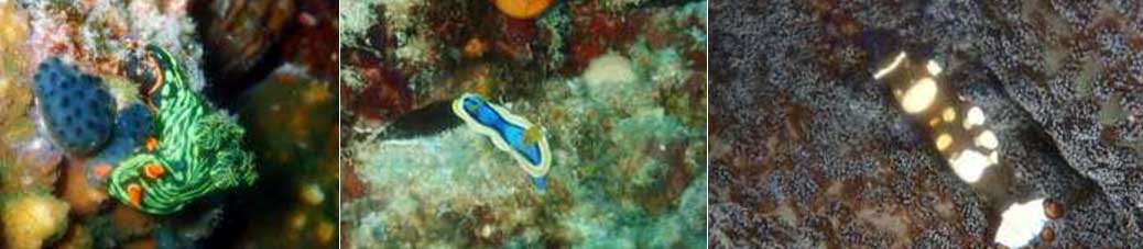 [스쿠버다이빙] 팔색조 수중 세계를 품은 아름다운 보홀(B