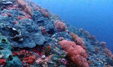 [스쿠버다이빙] 모알보알... 숨겨진 보물 sunken