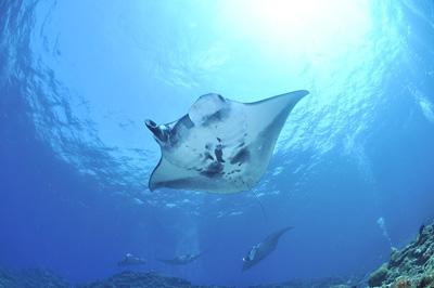 [스쿠버다이빙] 상어를 보러 떠나자, 말라파스쿠아 II