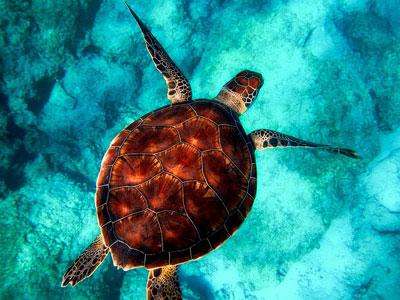 [스쿠버다이빙] 행운과 장수의 상징 거북이가 유영하는 그