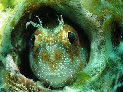 [스쿠버다이빙] 막탄이 자랑하는 꼰띠끼 월 & 산호초 군락